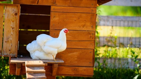 55+ DIY Chicken Coop Plans For Free