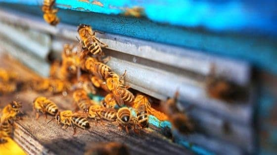 Overwintering Honeybees: 5 Things You Need To Know!