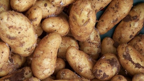 How To Cure And Store Potatoes For Long Term Storage