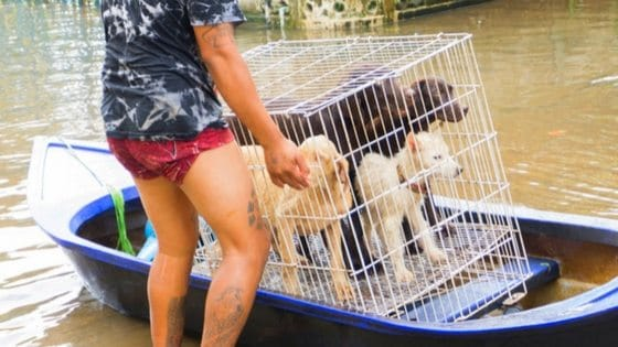 13 Heartwarming Stories Of Animals Rescued During Hurricane Harvey