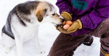 How To Keep A Dog House Warm In Winter