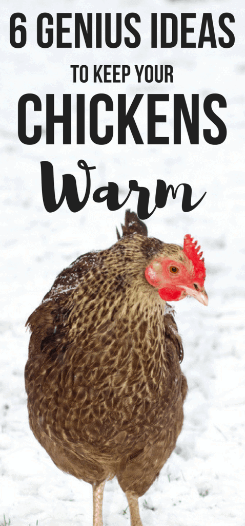 Want genius ideas to keep a chicken coop warm in winter? Here's 6 genius hacks perfect for beginner backyard chicken mamas!
