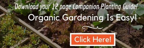 square foot gardening plant spacing