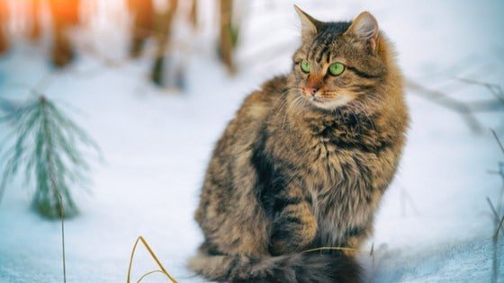 Want ideas about how to keep outside cats warm in the winter? Here's how to care for outdoor cats in winter, build an outdoor cat shelter, and other outdoor cats care ideas.