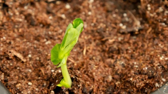 What can you grow in January? Plenty! Here's 7 vegetable gardening ideas (vegetable herbs) for seedlings you can start right now!