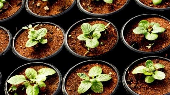13 Organic Gardening Supplies Every Woman Needs