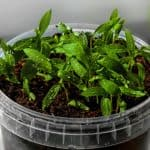 When to Start Seeds Indoors Planning Guide