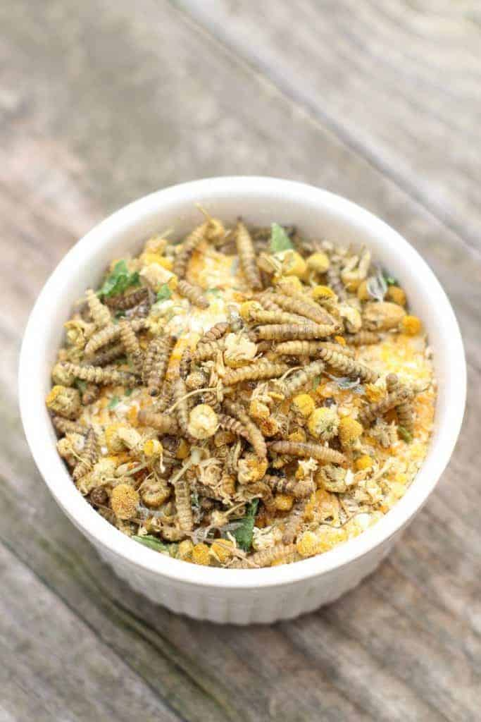 "Chamomile & Black Soldier Fly Larvae ""Granola"" backyard chicken treat"