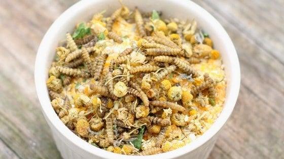 "4 Ingredient Chamomile & Black Soldier Fly Larvae ""Granola"""