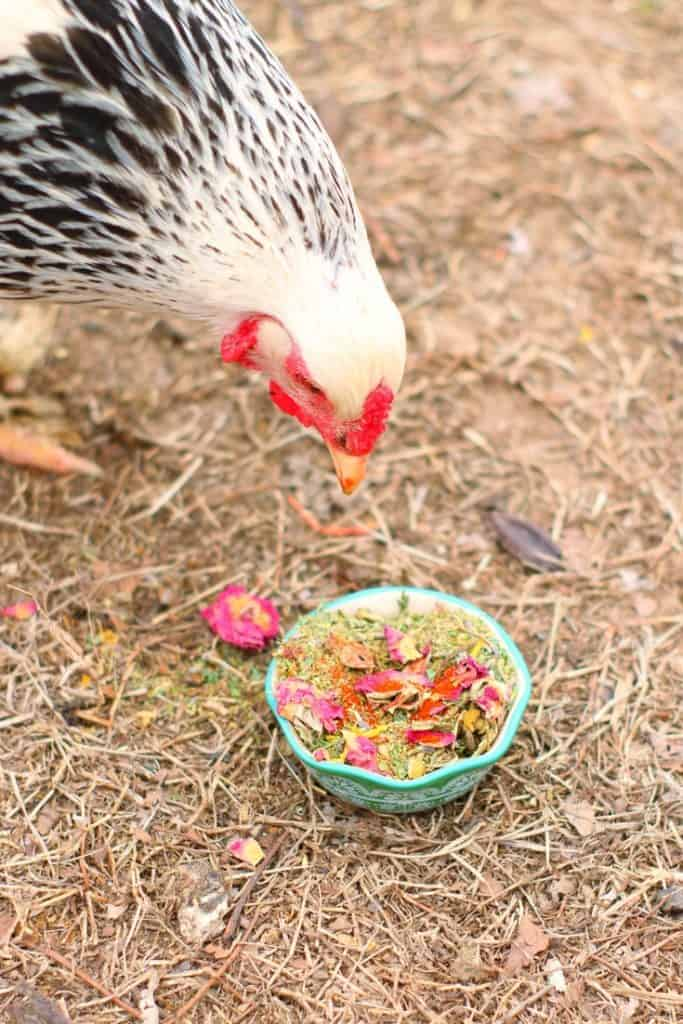 deworming herbal mix for backyard chickens