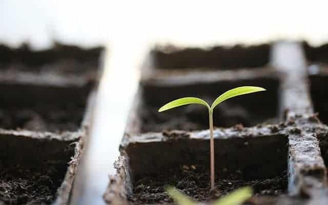 Seeding Starting Hacks That Will Make Growing a Garden Easier