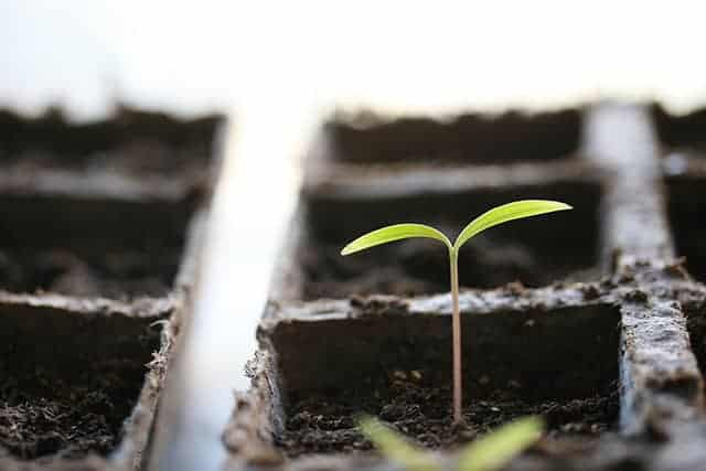 Seed Starting Hacks That Will Make Growing a Garden Easier
