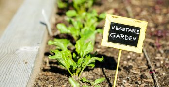 9 Genius Time Saving Gardening Tips for Uber Busy People