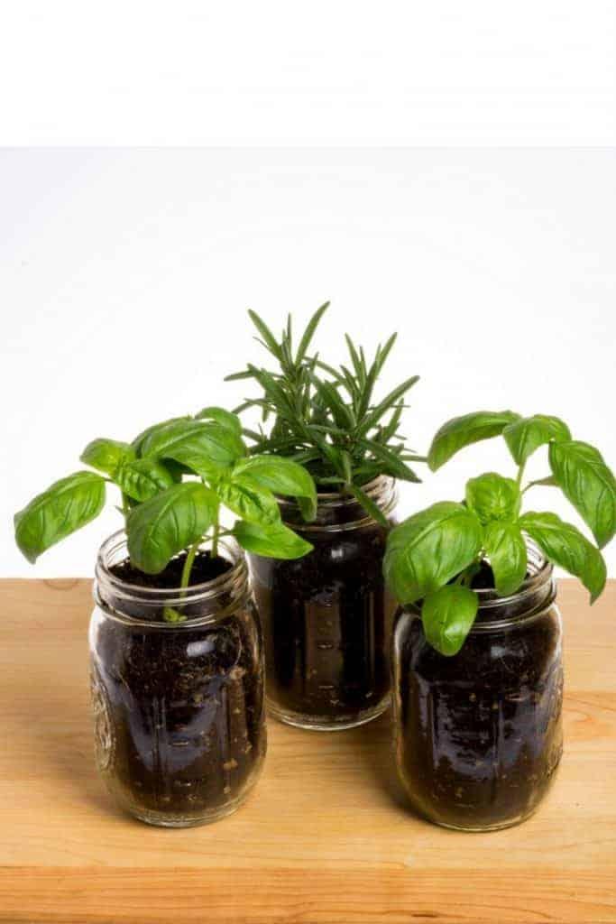 Mason Jar Herb Garden 1 683x1024