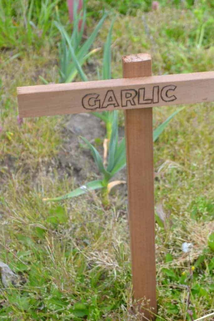 DIY garden markers for garlic