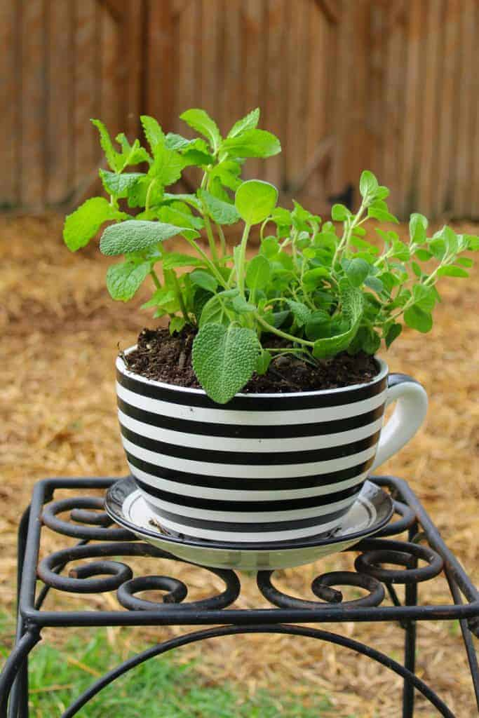 Herb Pot For Chickens On Iron Table 683x1024