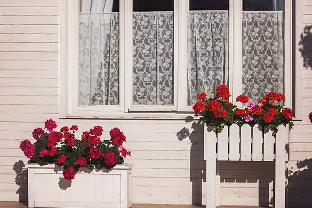 window box ideas for backyard chicken coops