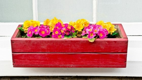 Adorable Window Box Ideas For Your Coop