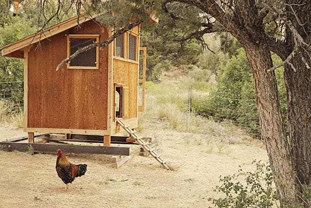 Window Ideas For Chicken Coops | Pampered Chicken Mama
