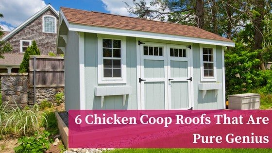 6 Chicken Coop Roofs That Are Pure Genius