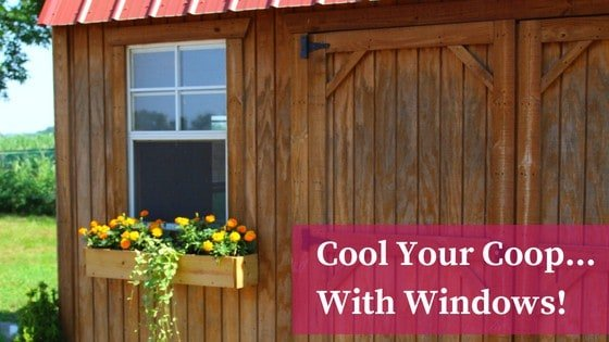 Hot Chicken Coop? Add Windows With This DIY Tutorial!