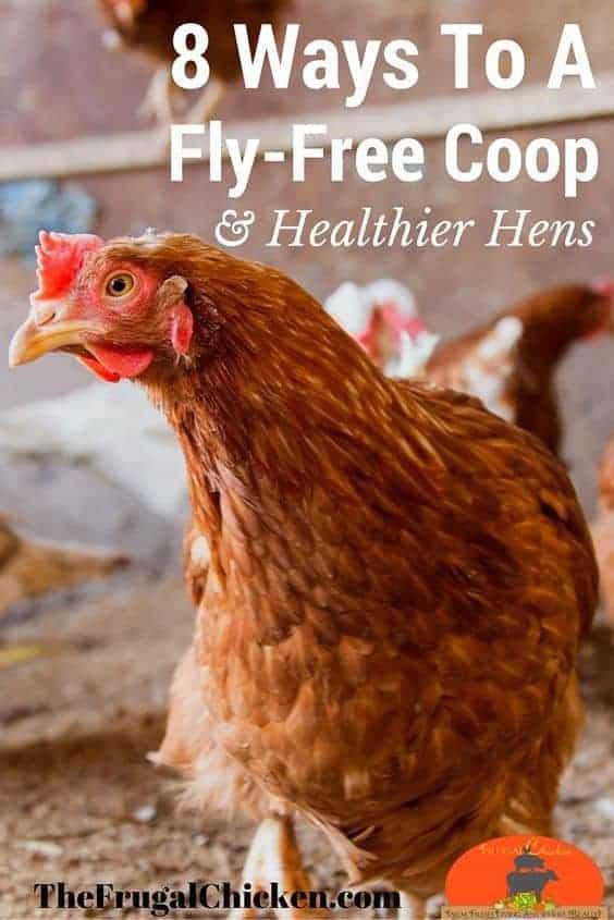 Get Rid Of Flies In Your Chicken Coop For Happier Hens! | Pampered