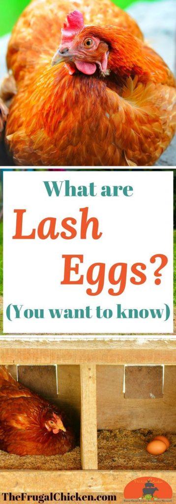 Lash Eggs 358x1024