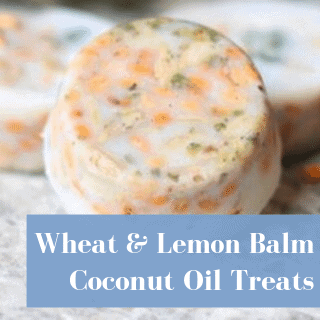 lemon balm treat for backyard chickens