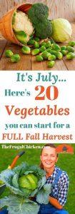 July Vegetable Gardening 105x300