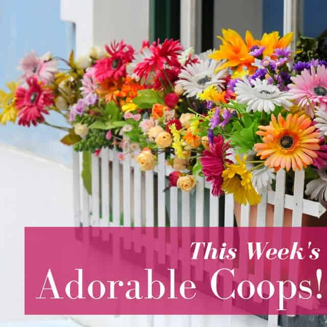 10 Beautiful Winter Window Boxes for Your Coop