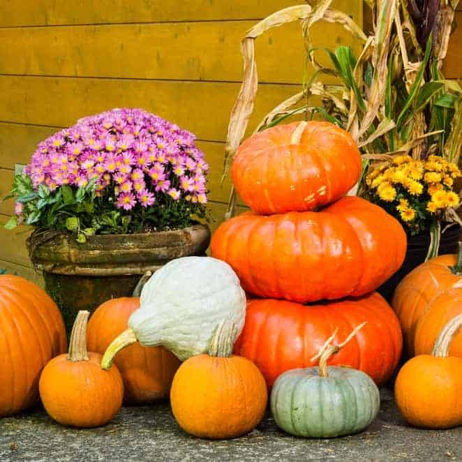 10+ Amazing, Must Make DIY Fall Decorations For Your Coop