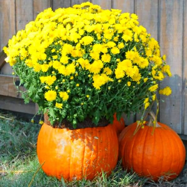 DIY Pumpkin Vase Chicken Coop Decoration For Fall