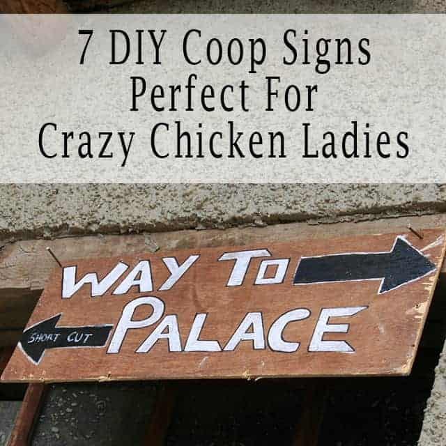 7 DIY Coop Signs For Crazy Chicken Ladies