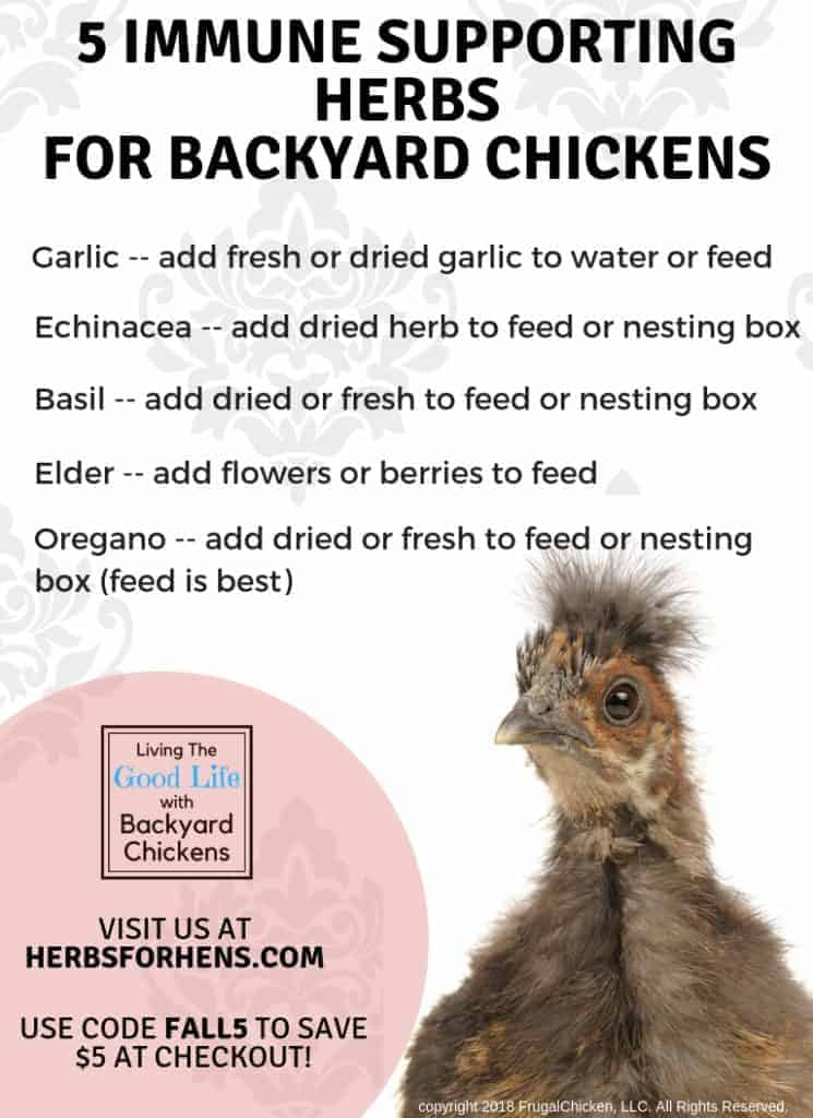 herbs for backyard chickens