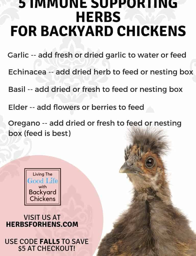 5 Immune Supporting Herbs For Backyard Chickens