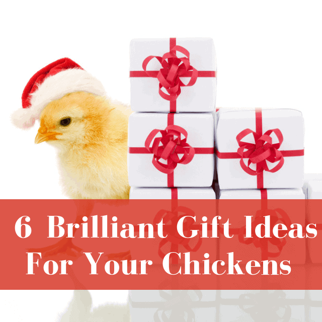 6 Brilliant Gift Ideas For Your Chickens