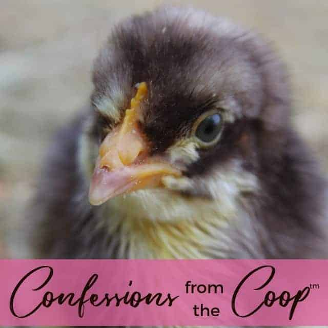 Fall Has Arrived! Confessions from the Coop (TM)