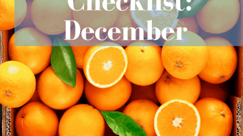 What to buy at the farmers market in December!