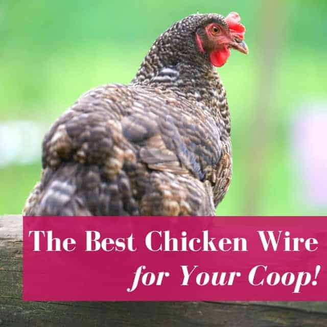 Chicken Wire For Coops: Buyer's Guide