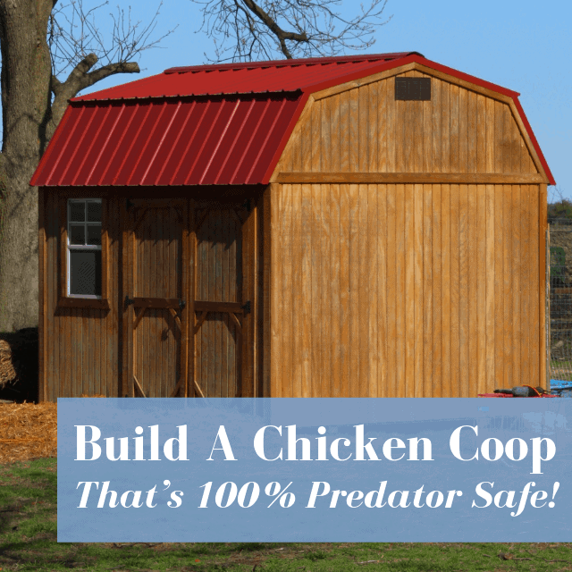 Build A Chicken Coop That's 100% Predator Safe