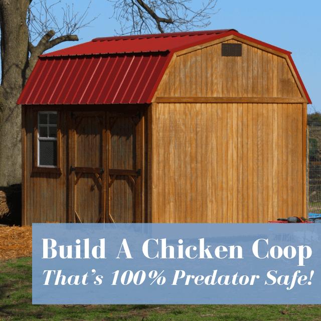 Build A Chicken Coop That's 100% Predator Safe
