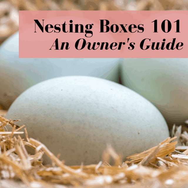 Chicken Nesting Boxes: Owner's Guide