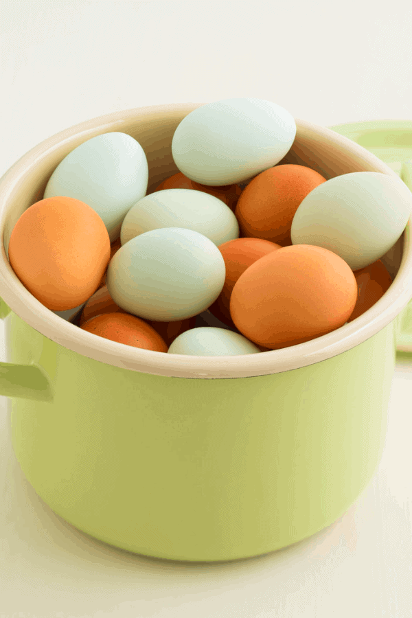 blue easter egger eggs