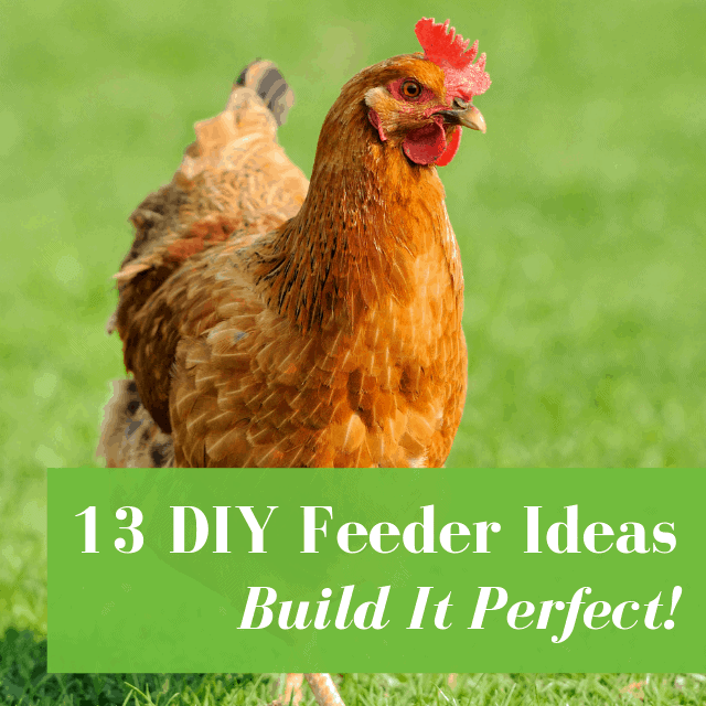 diy chicken feeder ideas for backyard chickens