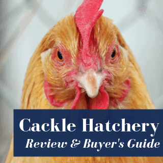 cackle hatchery product review