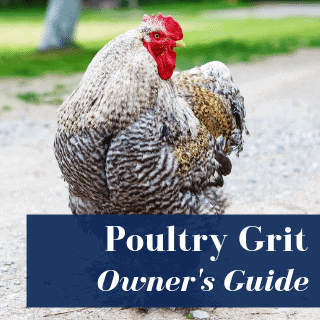 poultry grit with chicken