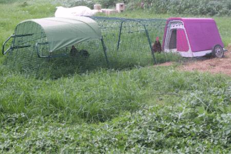 eglu go chicken coop