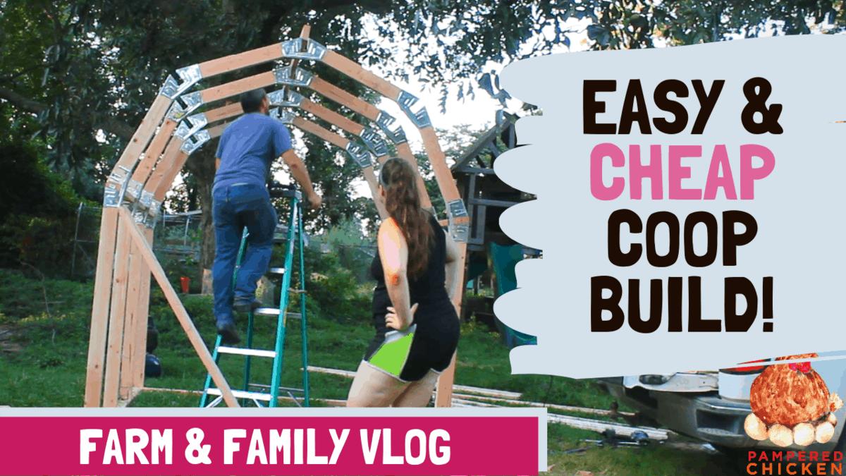 Easy & Cheap DIY Chicken Coop Build
