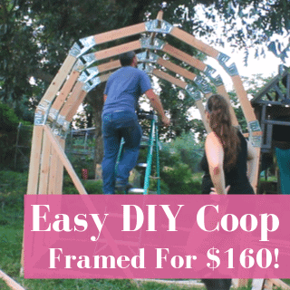 Easy & Cheap DIY Chicken Coop Build