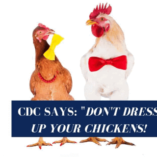 chickens in costumes